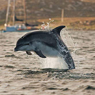 days out – dolphin spotting in the Hebrides