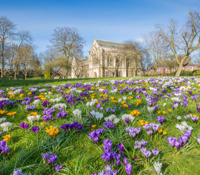 York Spring crocus by Mike Morley