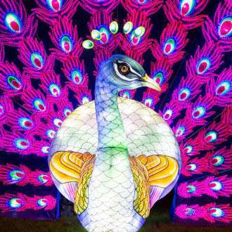 Lightopia London Peacock